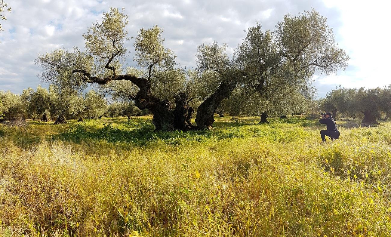 ANDACastellon_Claude et l'olivier millénaire ©Laurence Crinquant