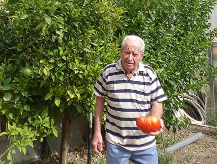 tomatessssP1280802
