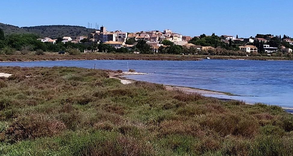 Salicornes à Balaruc le vieux_resultat