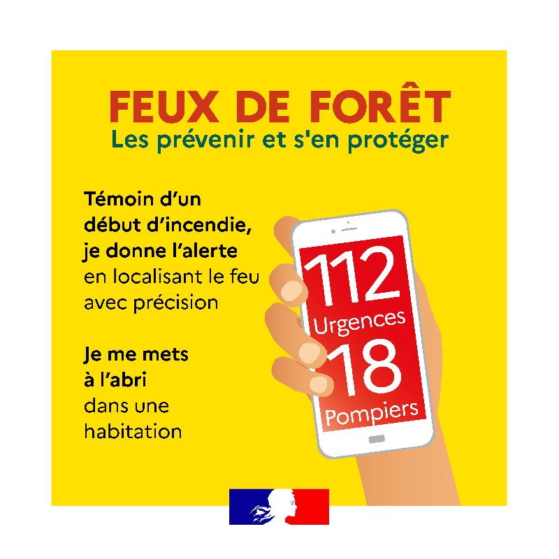 vig4-feuForet-1080-1080px (1)