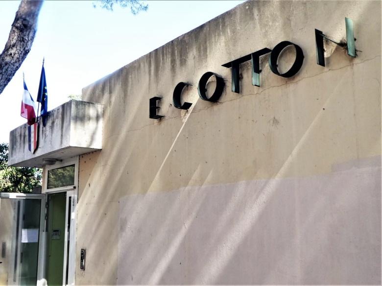 cottonP1100907 (2)